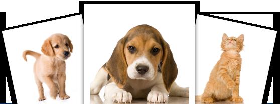small animal neurological emergencies pdf